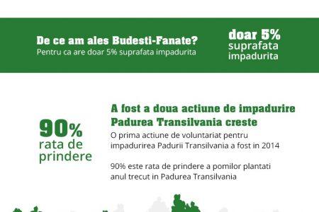 Banca Transilvania creste! 1500 de voluntari au plantat Padurea Transilvania