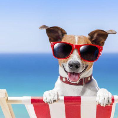 4 din 10 români economisesc în acest an pentru vacanța de vară. Ce cheltuieli tăiem de pe listă pentru o vară #HOT